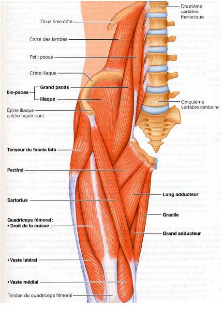 Exercice pour muscler les cuisses fitness vid os for Exercices pour interieur des cuisses