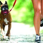 Les avantages de faire du sport avec son chien ?